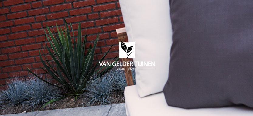 Detail Yucca filamentosa en Festuca glauca