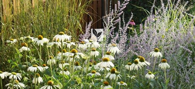 Witte margrieten met lavendel bloemen en andere bloemen soorten geplaatst door Van Gelder Tuinen