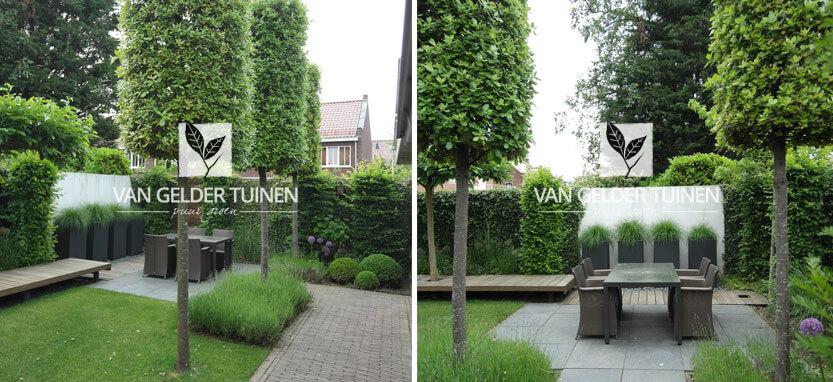 Moderne tuin met groenblijvende bomen